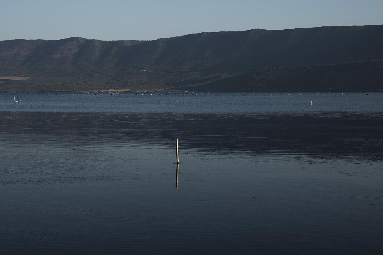 """41° 54' 36"""" N , 15° 46' 26"""" E Lago di Varano, Varano   Nel lago di Varano i mitili vengono allevati con il sistema long-line a sospensione, in vivai di forma rettangolare costituiti da pali in castagno (ricco di tannino e quindi più resistente all'azione distruttrice della bruma, un tarlo che predilige legni sommersi) o in ferro zincato conficcati per circa 2 m sul fondo, posti a circa 5 m l'uno dall'altro, sporgenti dall'acqua per circa 1,5 m e uniti a pelo dell'acqua da corde di nylon a cui sono legate le reste su cui crescono i mitili."""