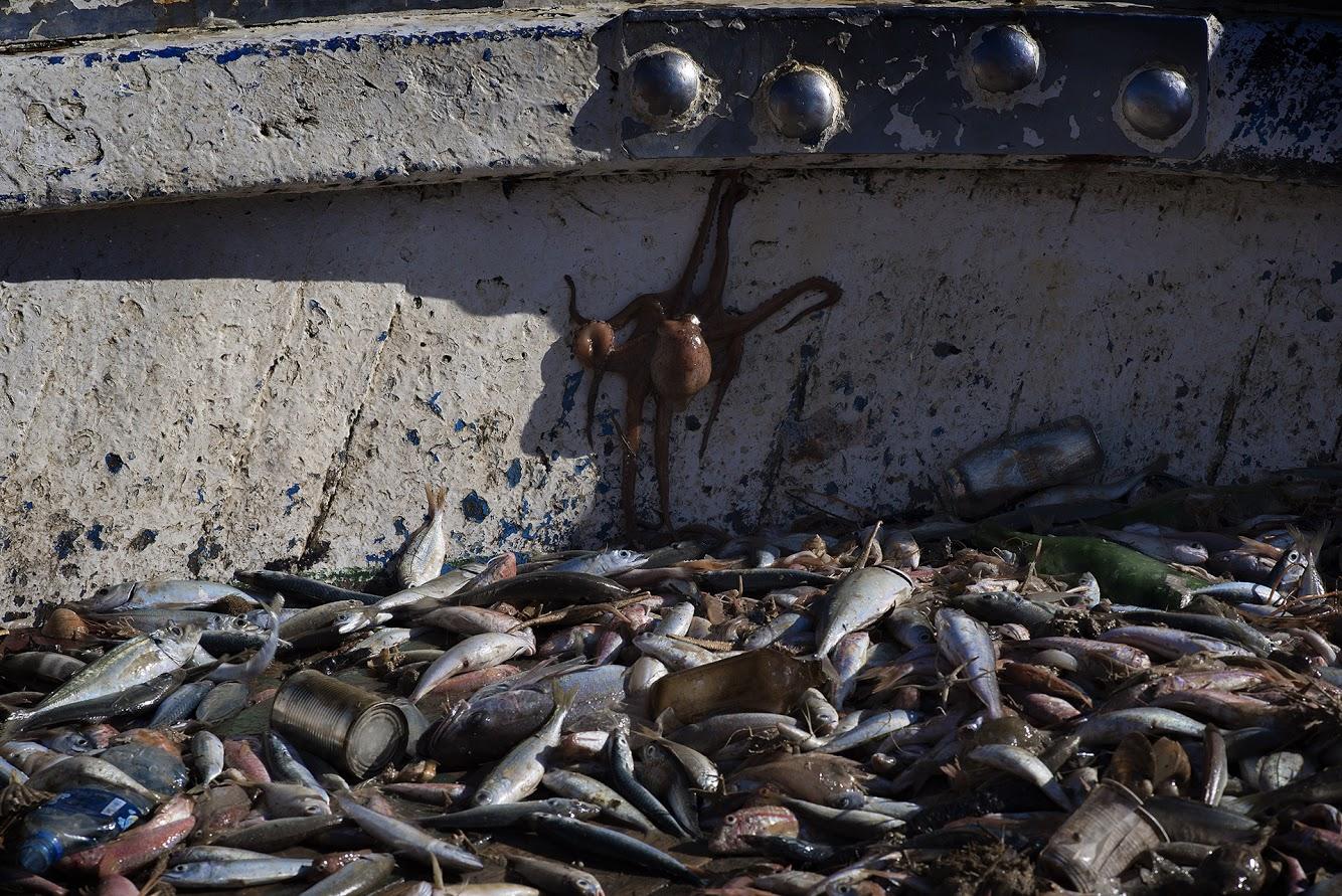 """41° 37' 32"""" N , 15° 55' 02"""" E Manfredonia, Promontorio del Gargano  Salpata di reti, del peschereccio """"Conoscitore"""" di Michele Conoscitore. Il 12 luglio 2018 i pescherecci che hanno aderito alla campagna di Clean Sea Life, in poche ore hanno salpato a bordo, insieme al pescato, una tonnellata e mezza di spazzatura accumulata sui fondali che, una volta portata a terra, è stata smal- tita. Nelle reti a strascico, sono finiti attrezzi da pesca perduti o abbandonati, copertoni, bottiglie, sacchetti, teli e stoviglie di plastica, tubi, boe, secchi di vernice e una quantità notevole di reste."""