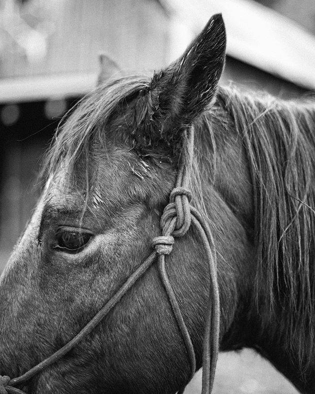 Horses, truly are magical! • • • • • • • • • • #travelblogger #blogger #houstonblogger #fashionblogger #lifestyleblogger #bloggerstyle #beautyblogger #publicrelations #pr #texasblogger #foodblogger #foodiesofinstagram #horsephotography #mountainblogger #colorado #coloradoblogger #denverblogger #collegeblogger #htxblogger