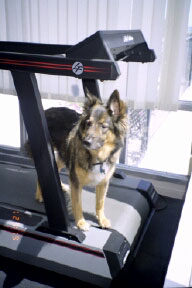 """""""When I work-out like a dog, I feel just great, and have so much more energy, see how great I look ?! """"    - Chelsea Marie"""