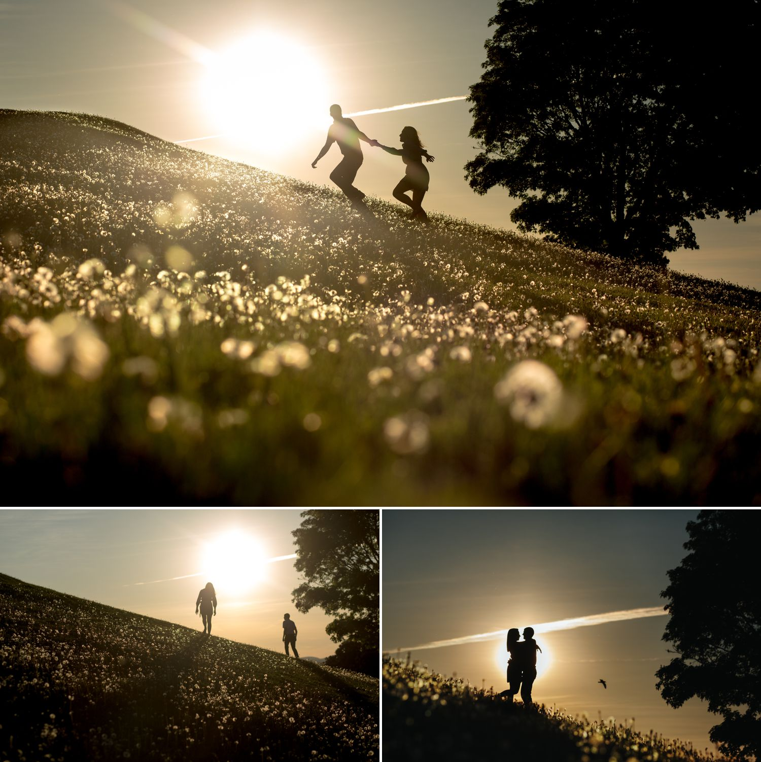 Photos from an engagement shoot in a downtown Ottawa park with the couple silhouetted against the setting sun