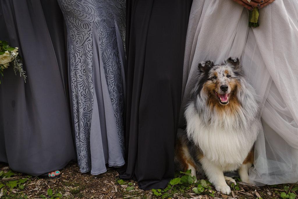 bridesmaids plus dog
