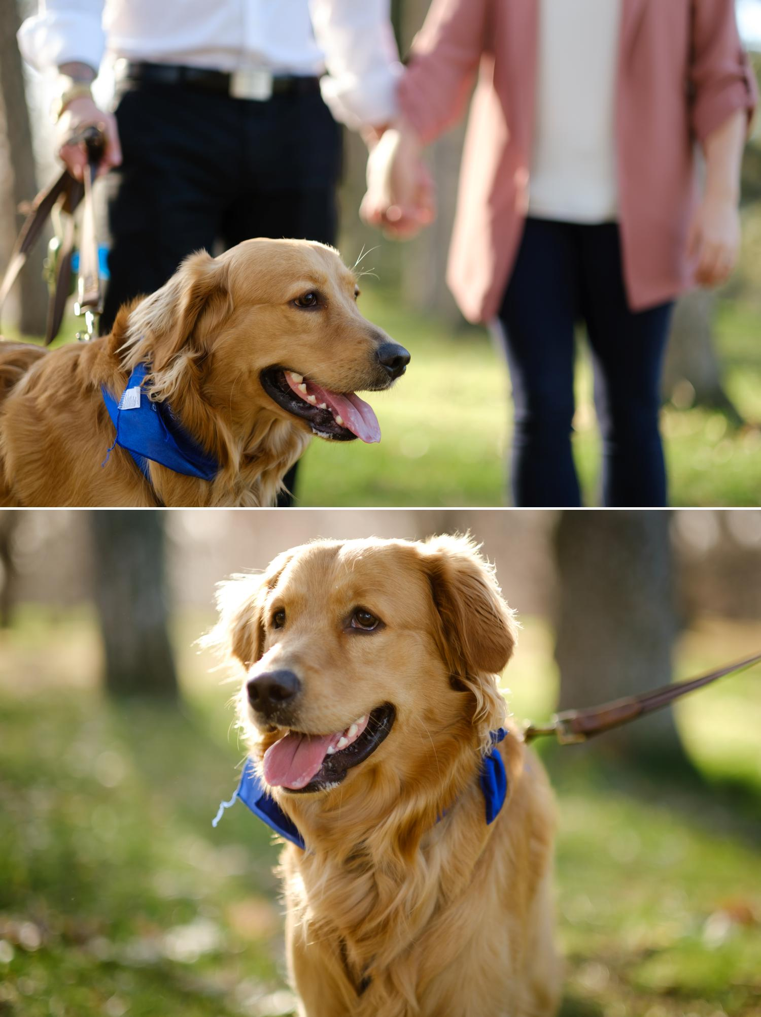 a dog at an engagement shoot