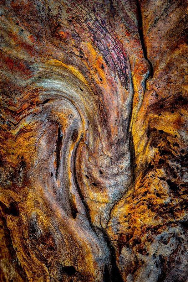 Driftwood Detail B