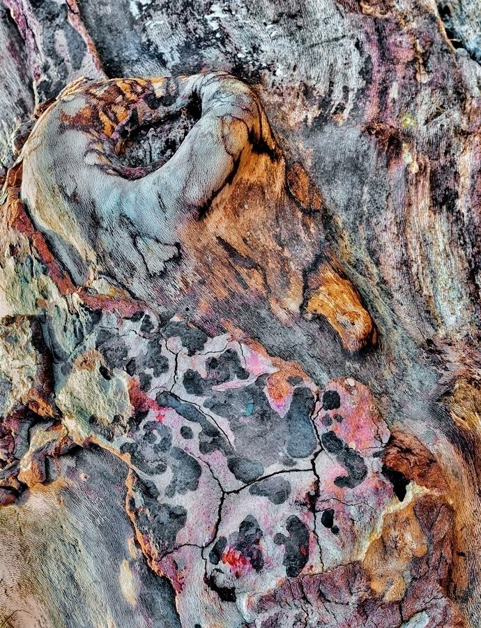 Driftwood Detail, Moonstone Beach