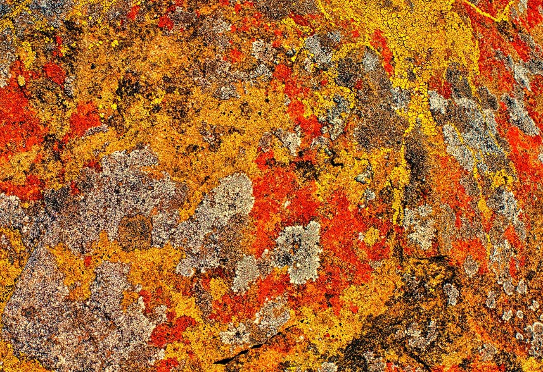 Lichen on Rock, Cambria