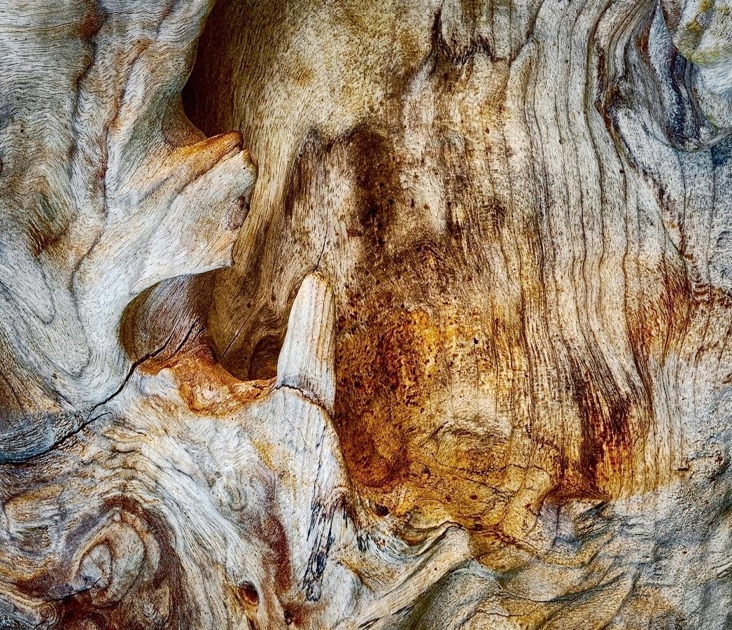 Driftwood Detail F