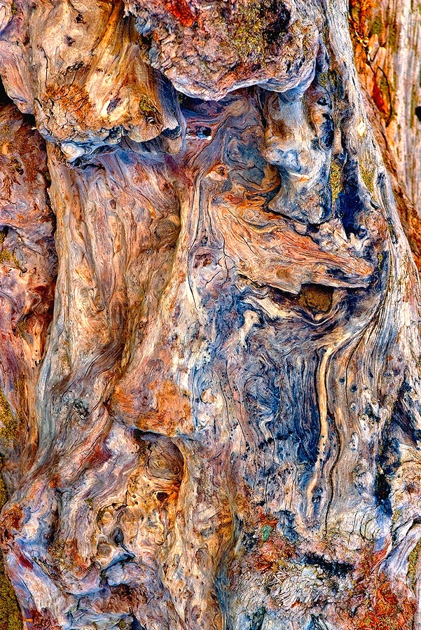 Driftwood Detail 64