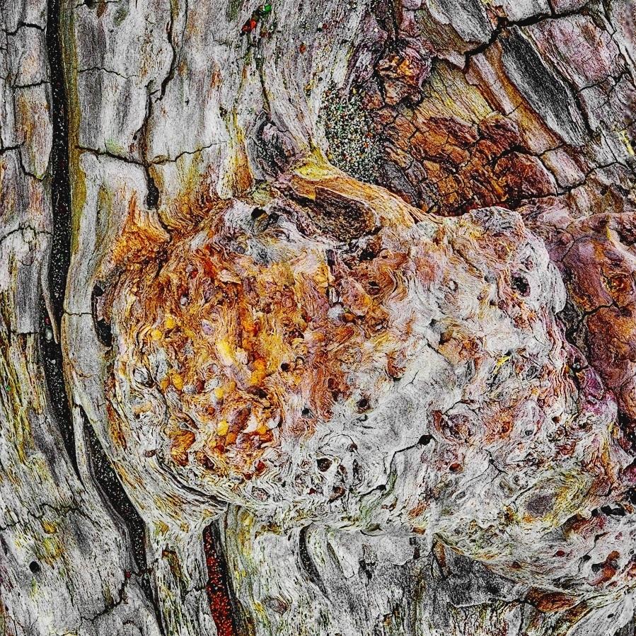 Driftwood Detail C