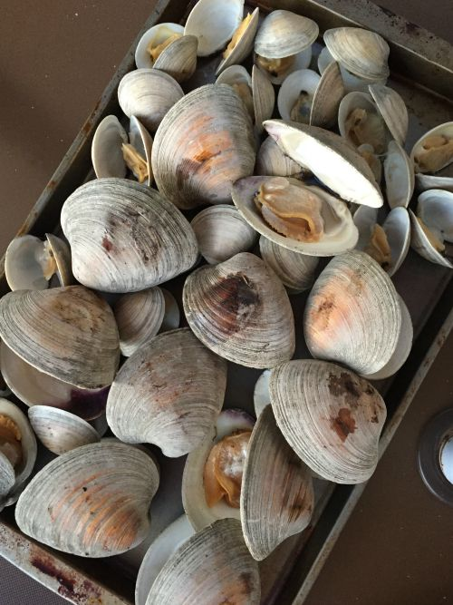 bethany 15 clams