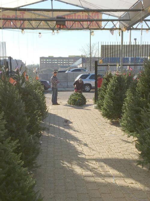 christmas 15 tree4