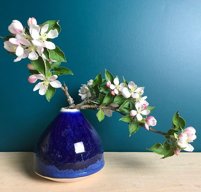 The apple blossoms are finally here!  #racheldecondeceramics #flowers🌸 #appleblossoms #flowervase #ikebanavase #saffireblue #handmadeceramics #madeinnovascotia