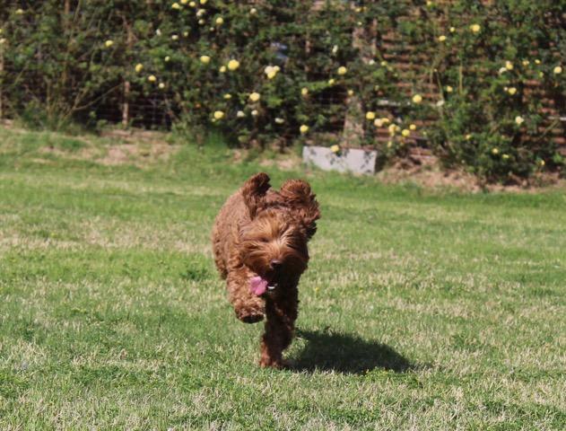 Bella good pic running.jpeg