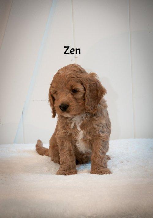 Zen+@+6+weeks.jpg