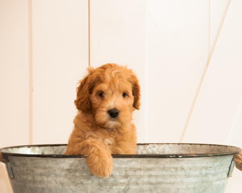 Wooten pup.jpg