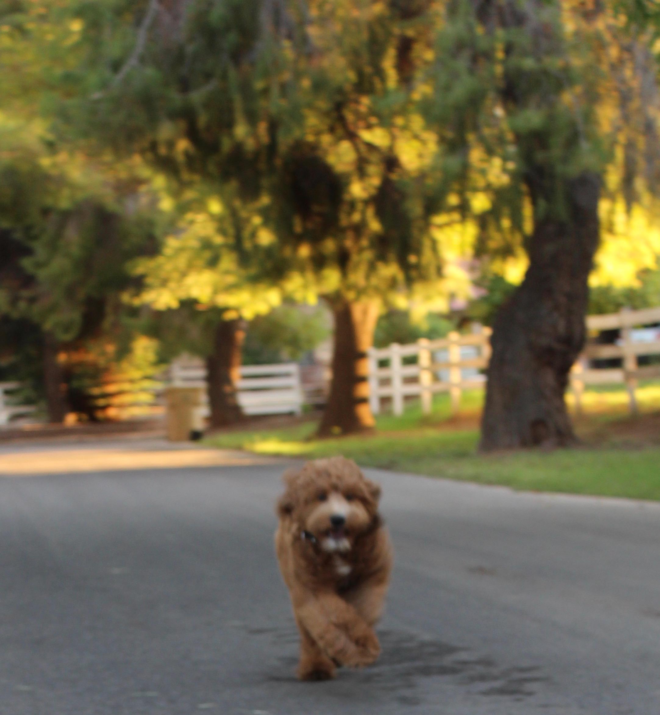 Zoey running w trees.jpg