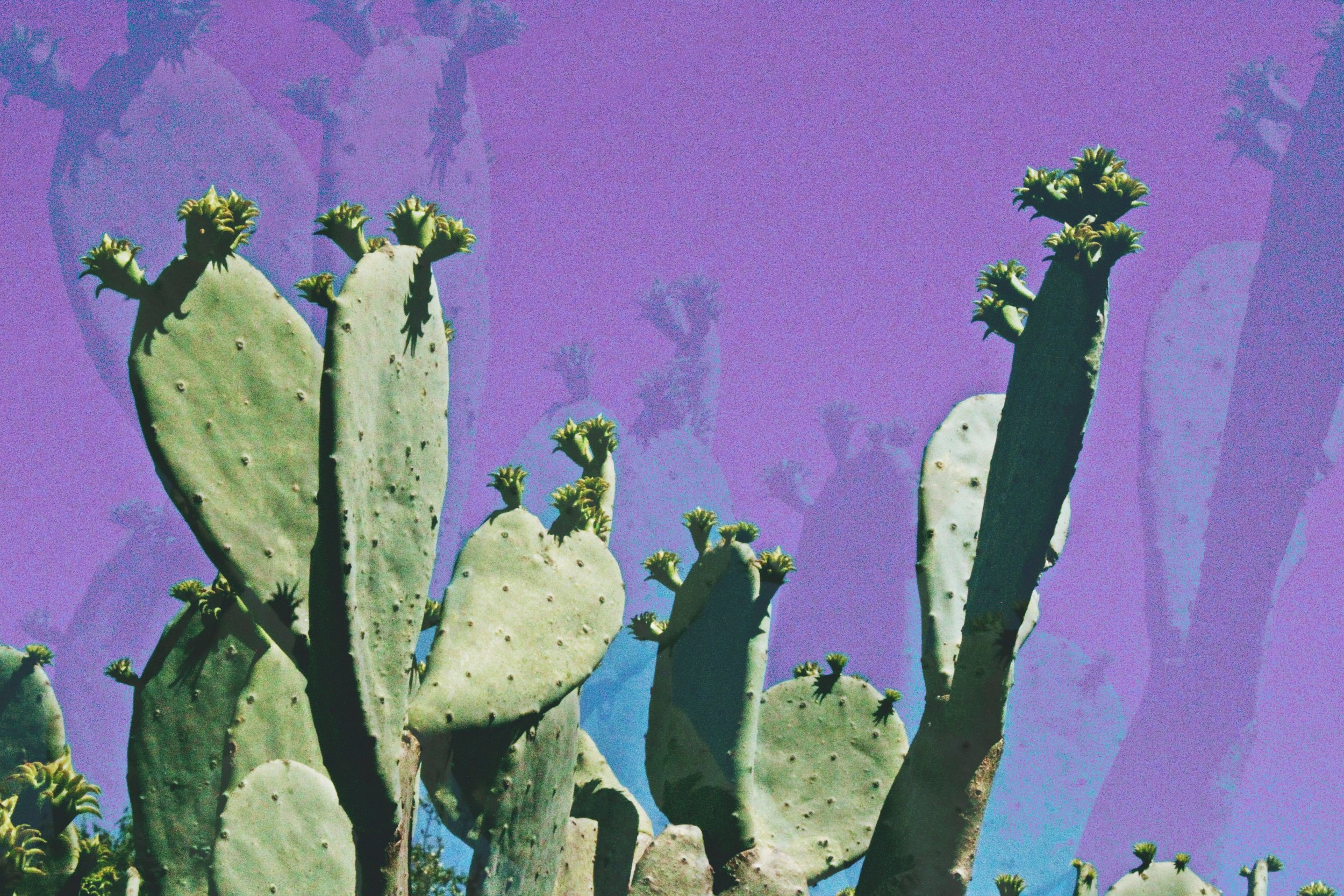 Prickly Pear Skies