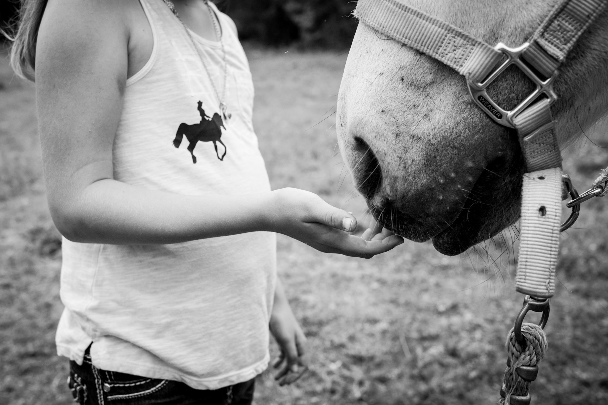 little girl touching her horse's nose