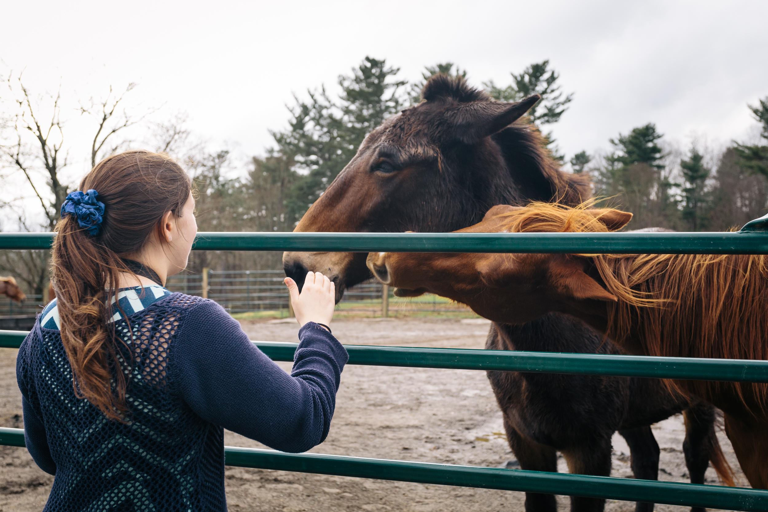 Horse petting.