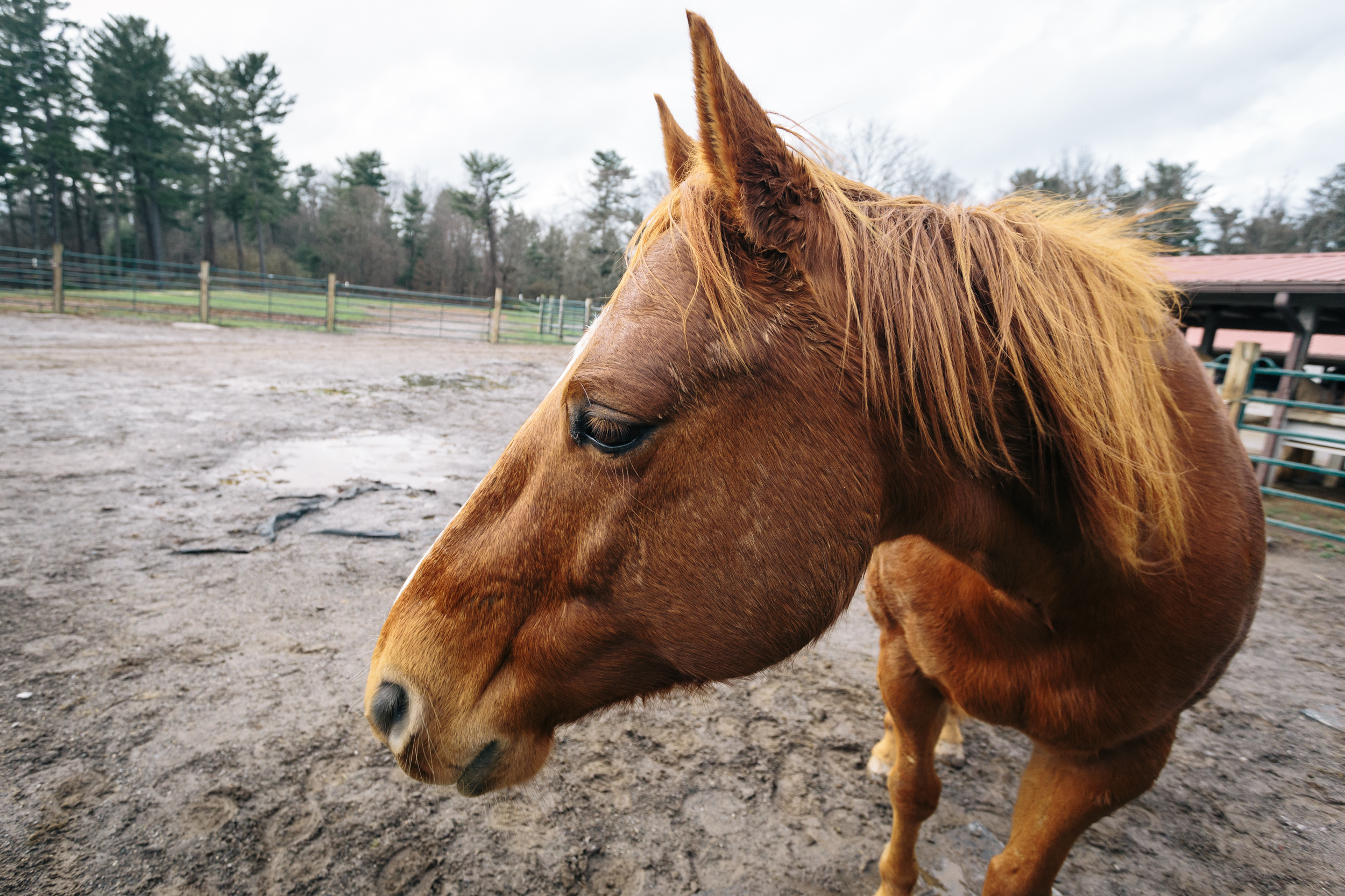 Ultra-wide close-up of a horse.