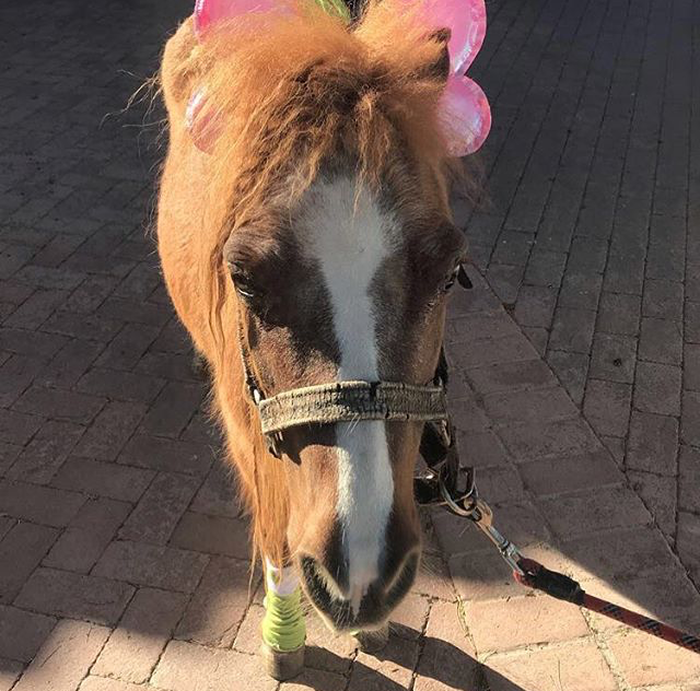 Pixi - Pixi is used for very small kids to ride and she helps build confidence. She is a miniature horse and because she's so small she's less intimidating to children that may be apprehensive around horses.