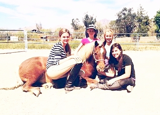 Pocket - Pocket is a pony and he is used for our little breeches lessons. He loves the little ones because they make him feel big. He is very docile and is great with the little kids!