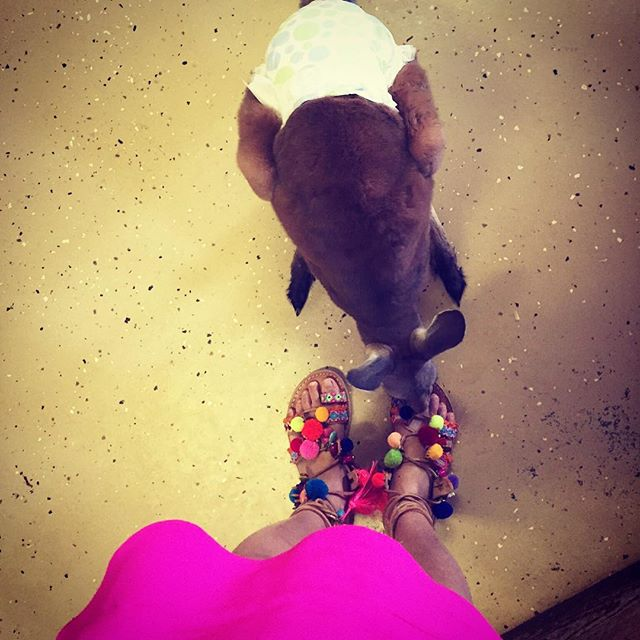 Even this baby kangaroo is enamored by my @elinalinardaki sandals 😍 {yes he's wearing a little diaper} #partyshoes #livecolorfully