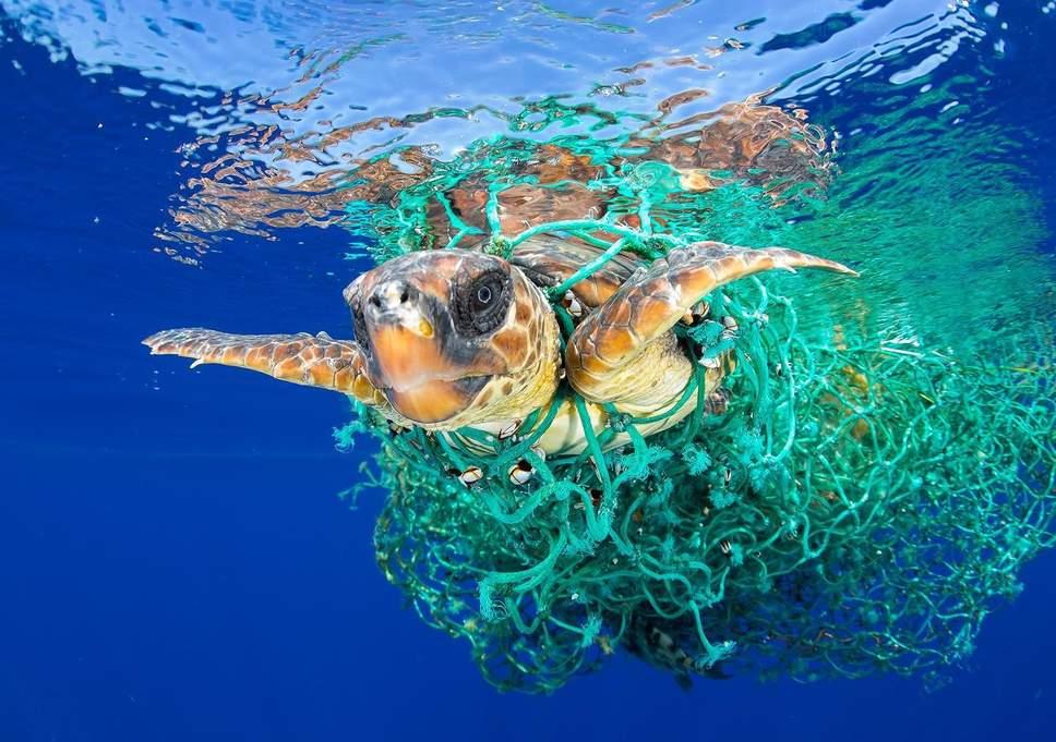 -viral-turtle-fishing.jpg