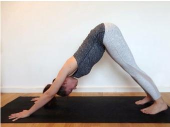 chien-tete-bas-yoga-debutant