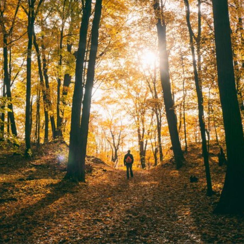 Vivre au rythme des saisons : l'automne -