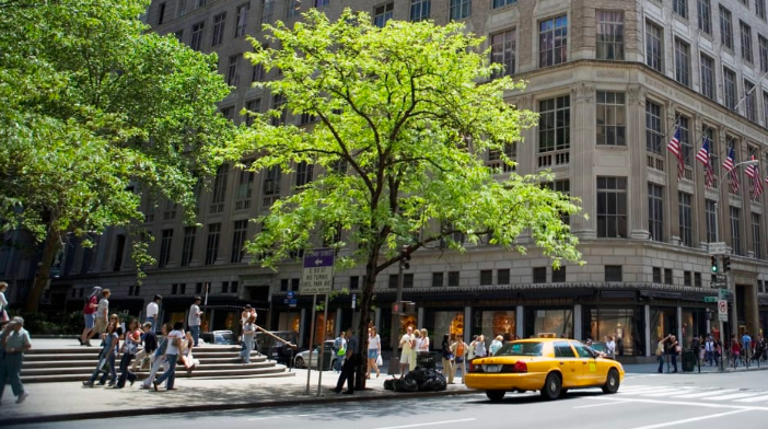 City trees may have reduced root space and face an assault of air pollution but they are making the most of the heat island effect.