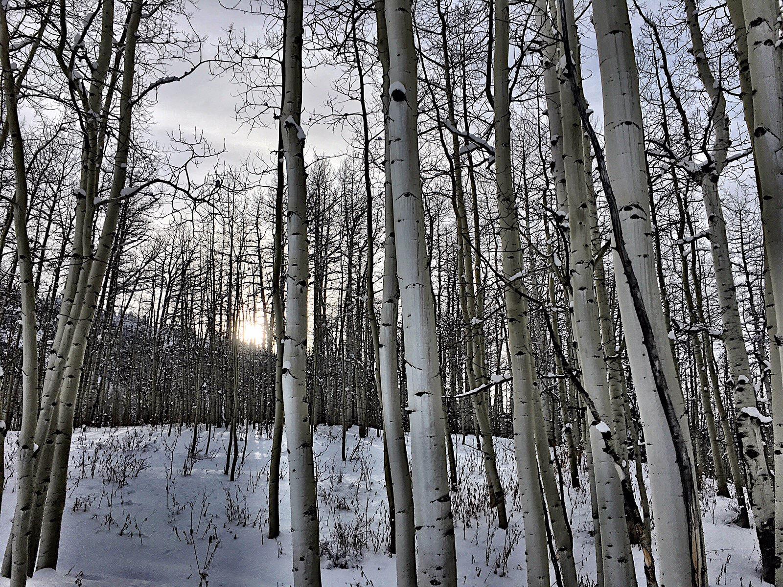Grungy Slopes, Aspen Colorado, The Gant 6.jpg