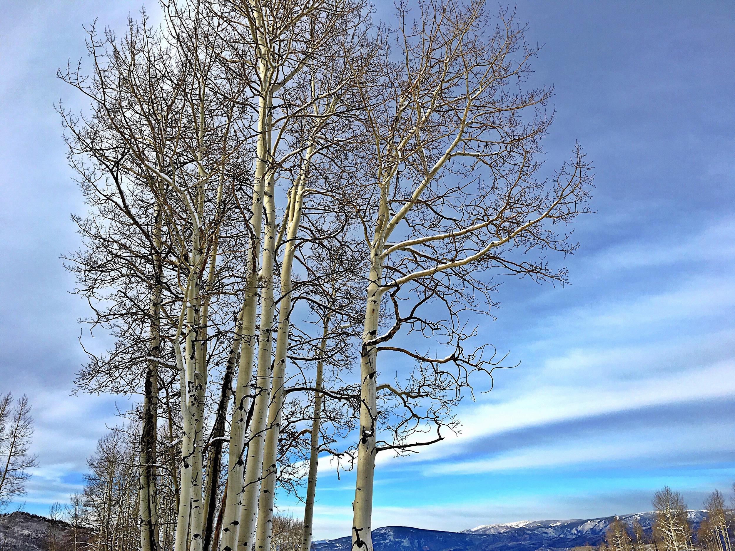 Grungy Slopes, Aspen Colorado, The Gant 5.jpg