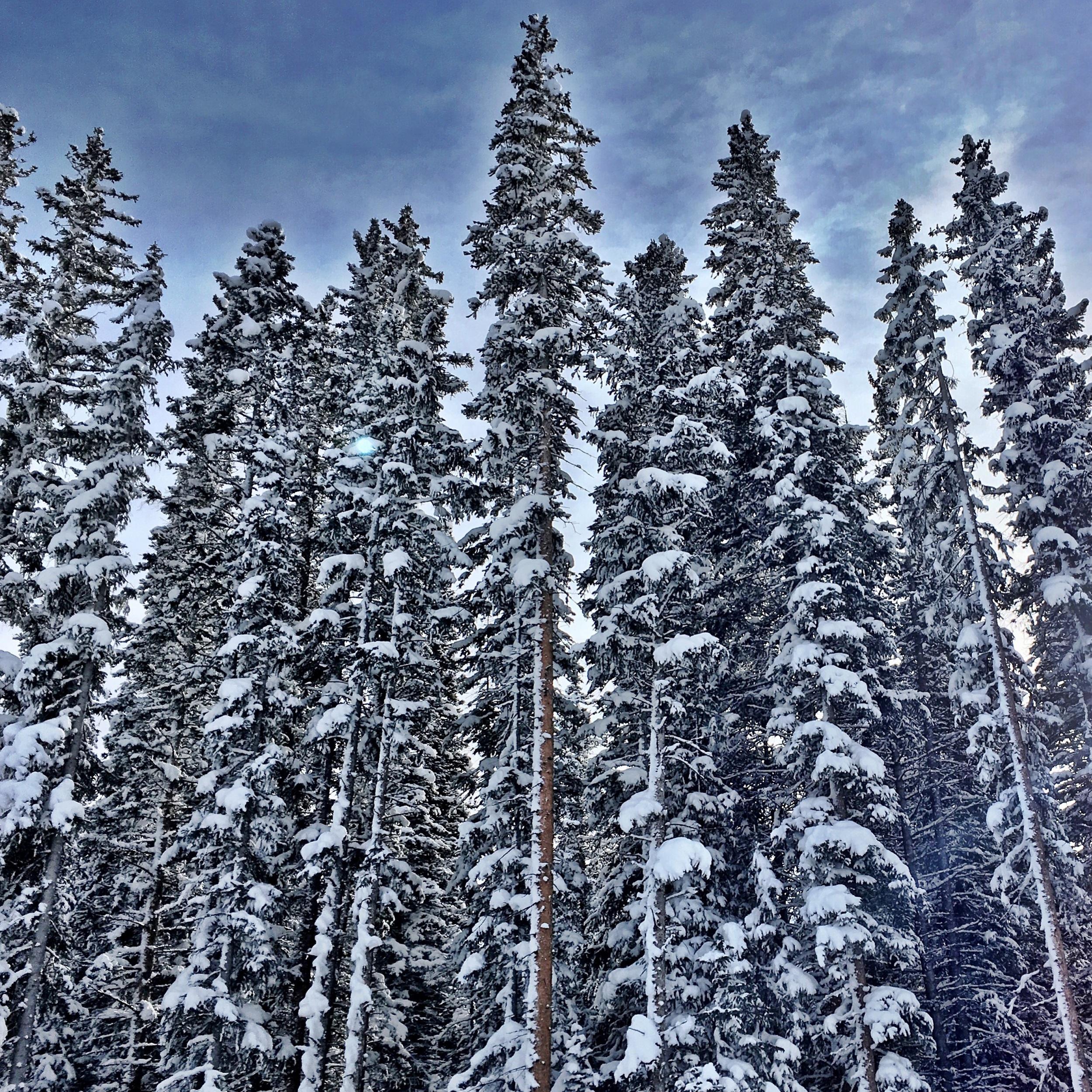 Grungy Slopes, Aspen Colorado, The Gant 18.jpg