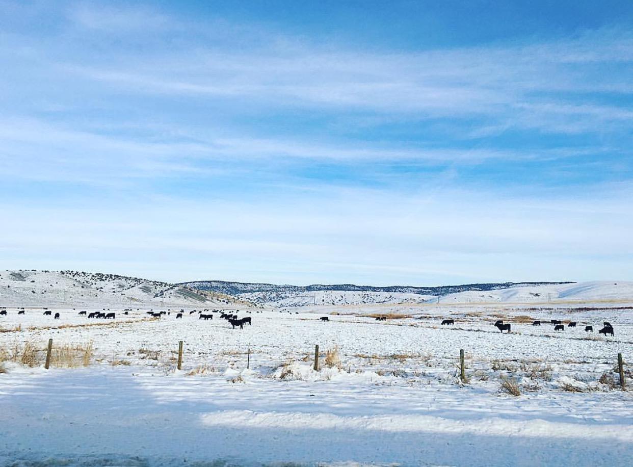 Grungy Slopes, Moran Wyoming, Togwotee Mountain Lodge 1.jpg