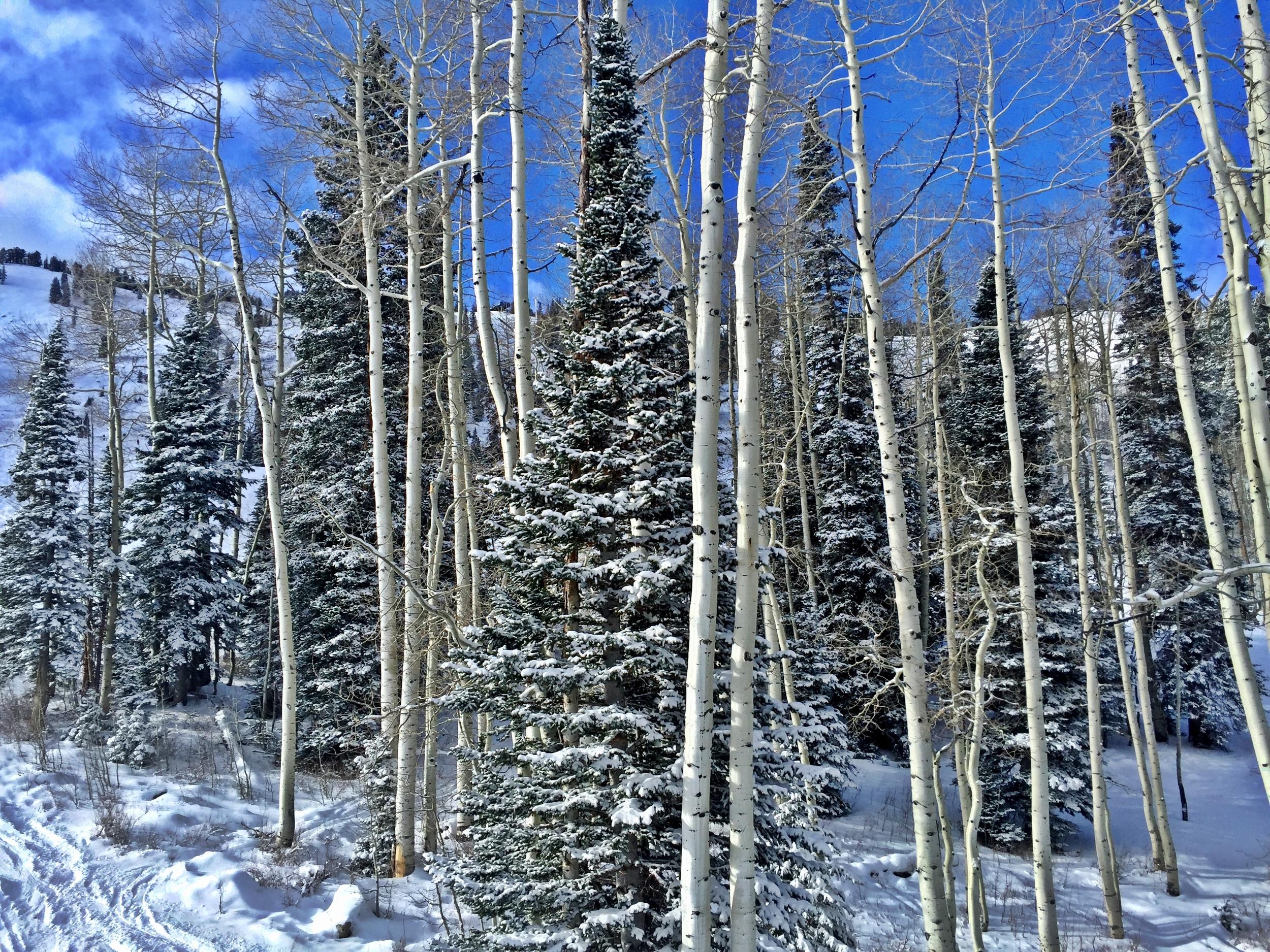 Grungy Slopes, Solitude Utah, Solitude Mountain Resort 13.jpg