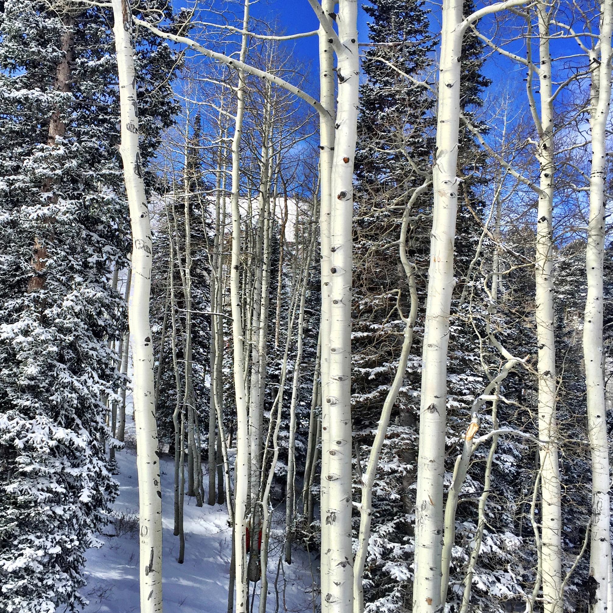 Grungy Slopes, Solitude Utah, Solitude Mountain Resort 26.jpg