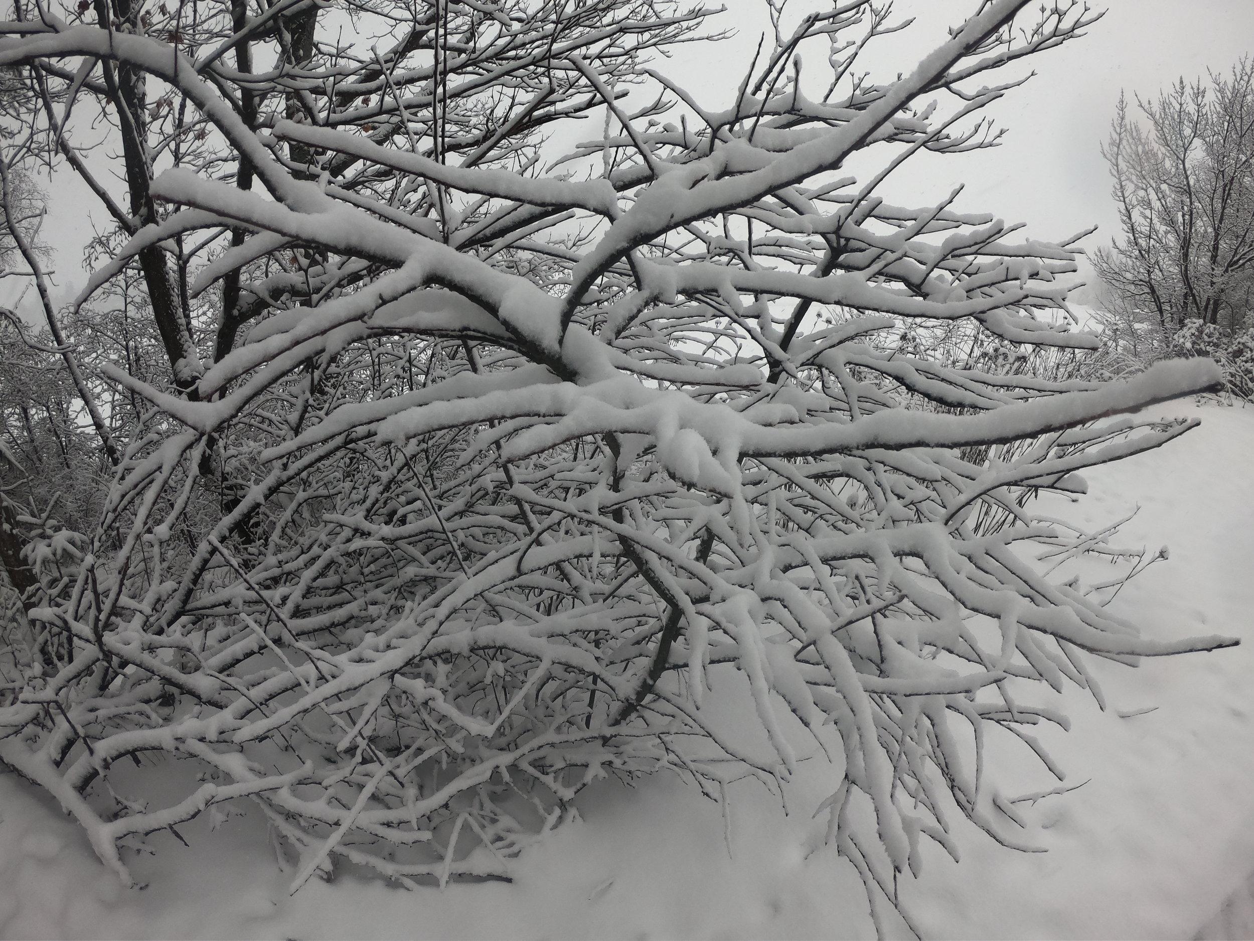 Photo Jan 09, 8 21 16 AM.jpg
