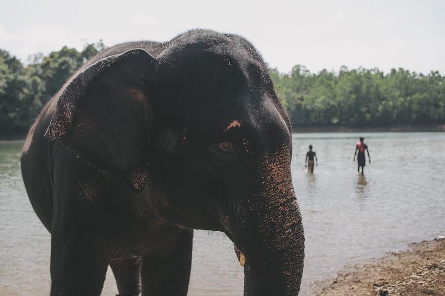 Kerala-43_o.jpg