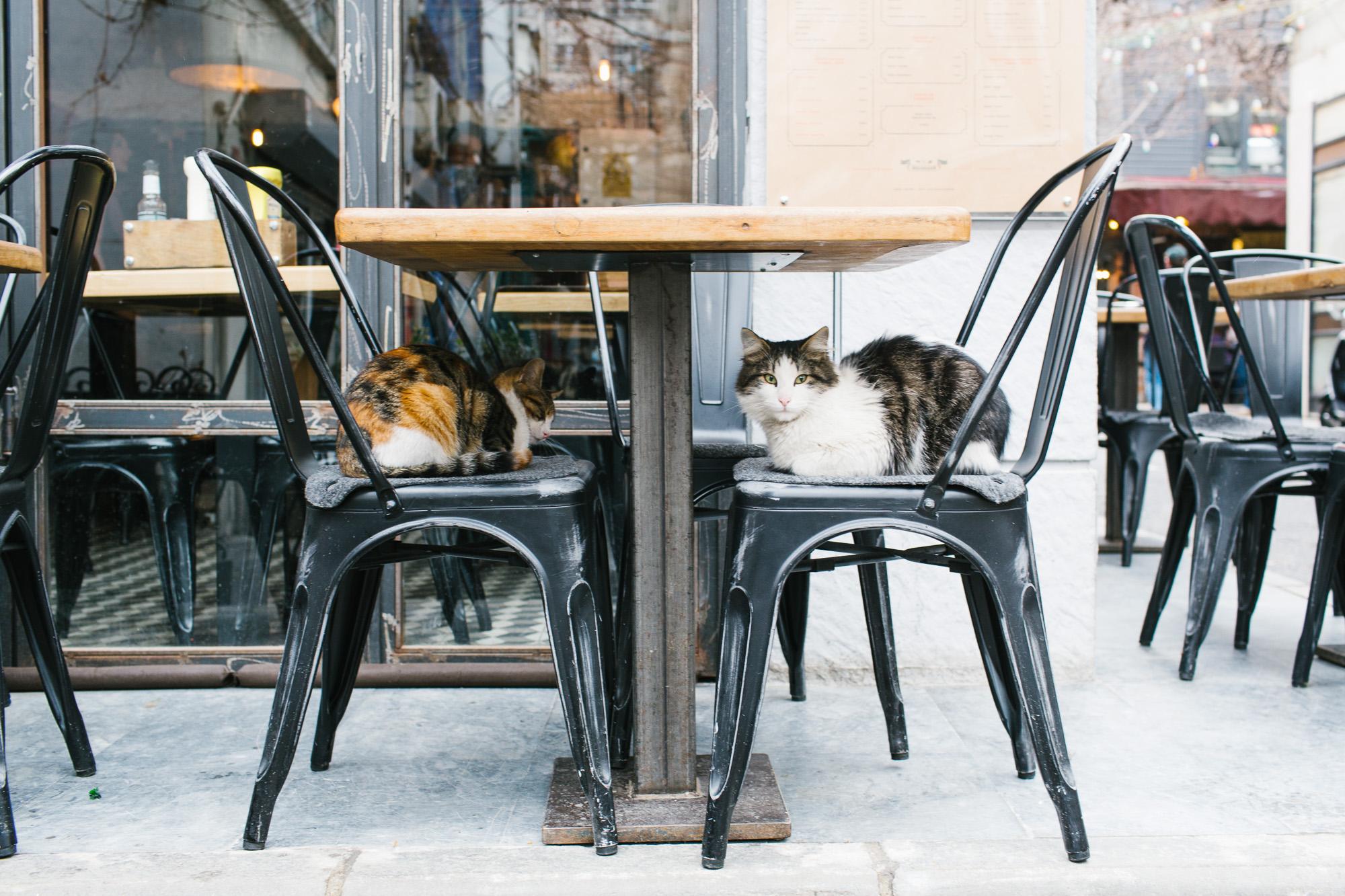 Istanbul_Coffee-AudiMagazine-FinnBeales-02.jpg