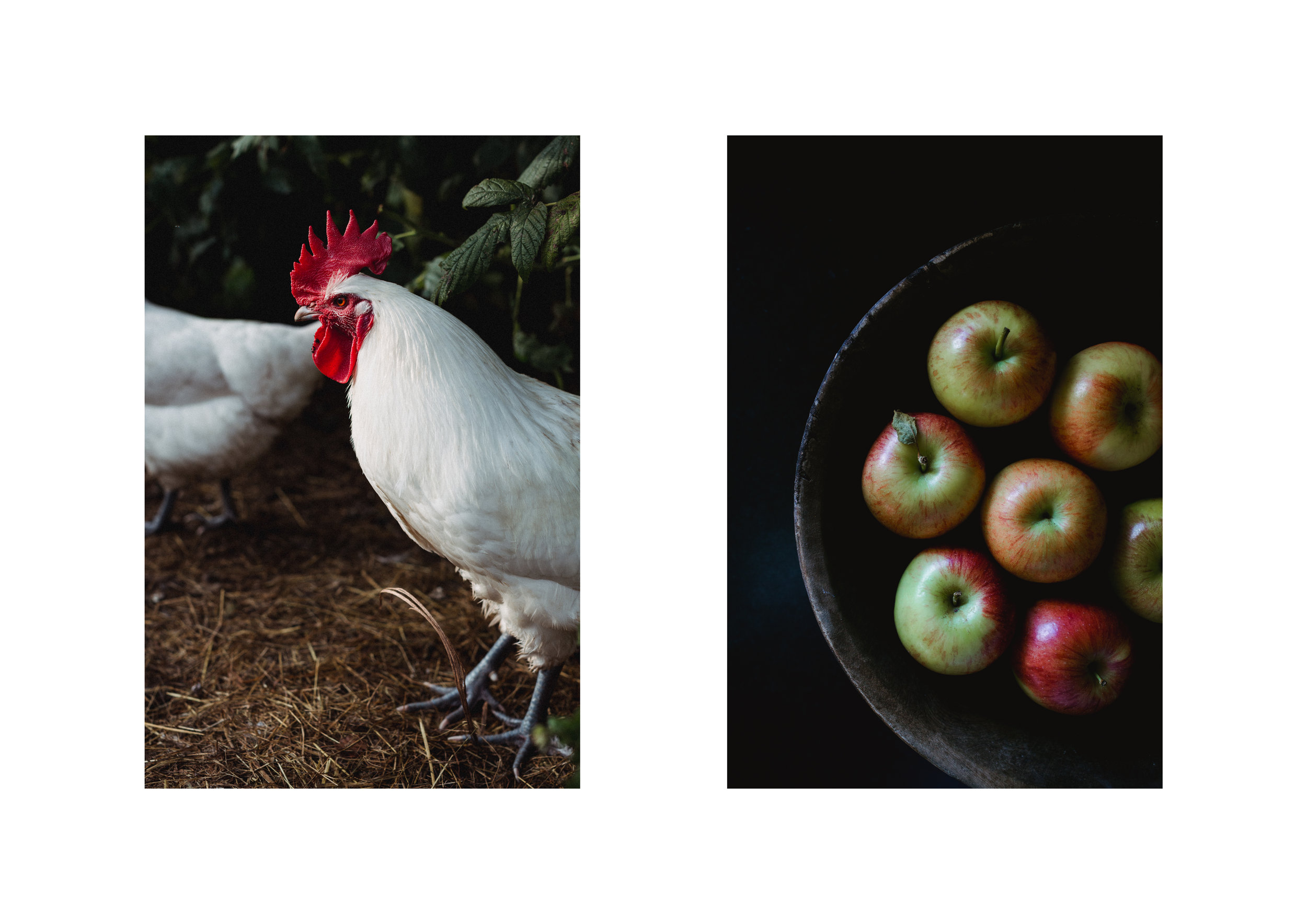 Chicken-Apple.jpg
