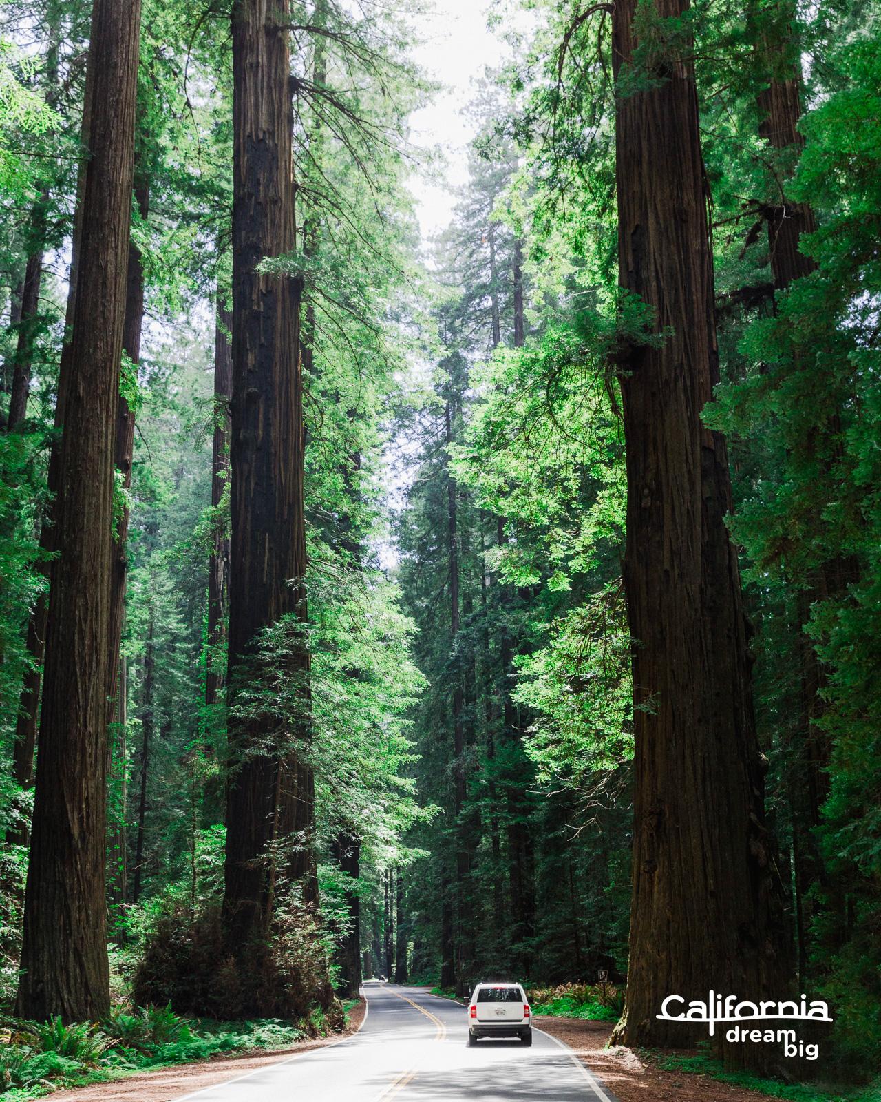 california-FinnBeales.jpg