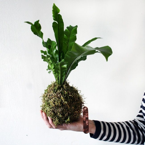 I'm not a fern fan but if you are a Bird's Nest Fern is the way to go