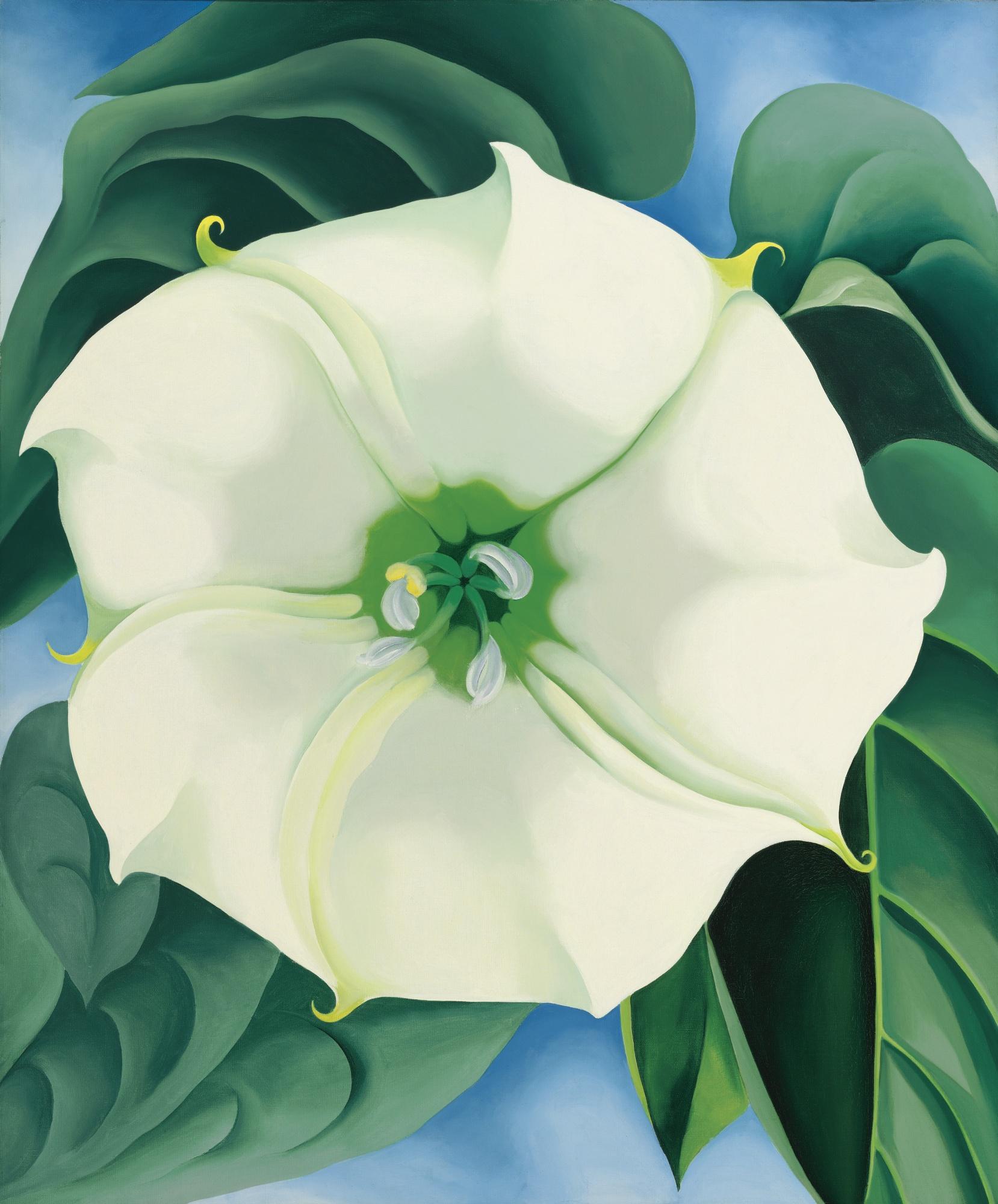 Jimson Weed / White Flower No. 1