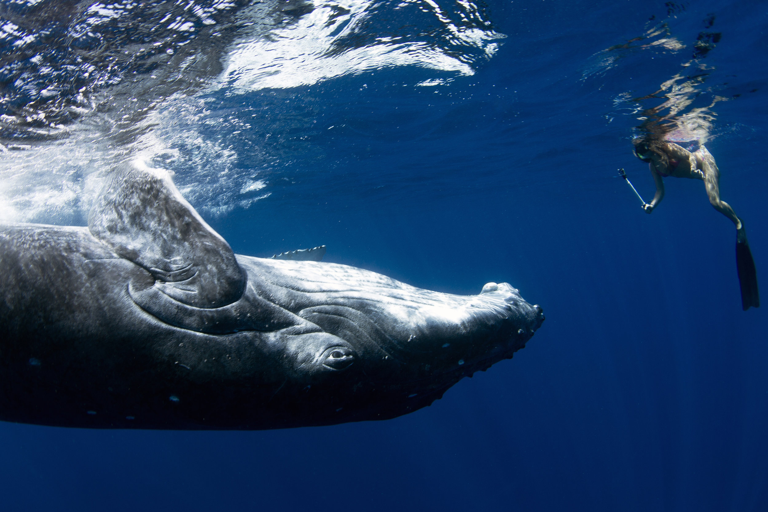 Swimming with Humpback Whales -
