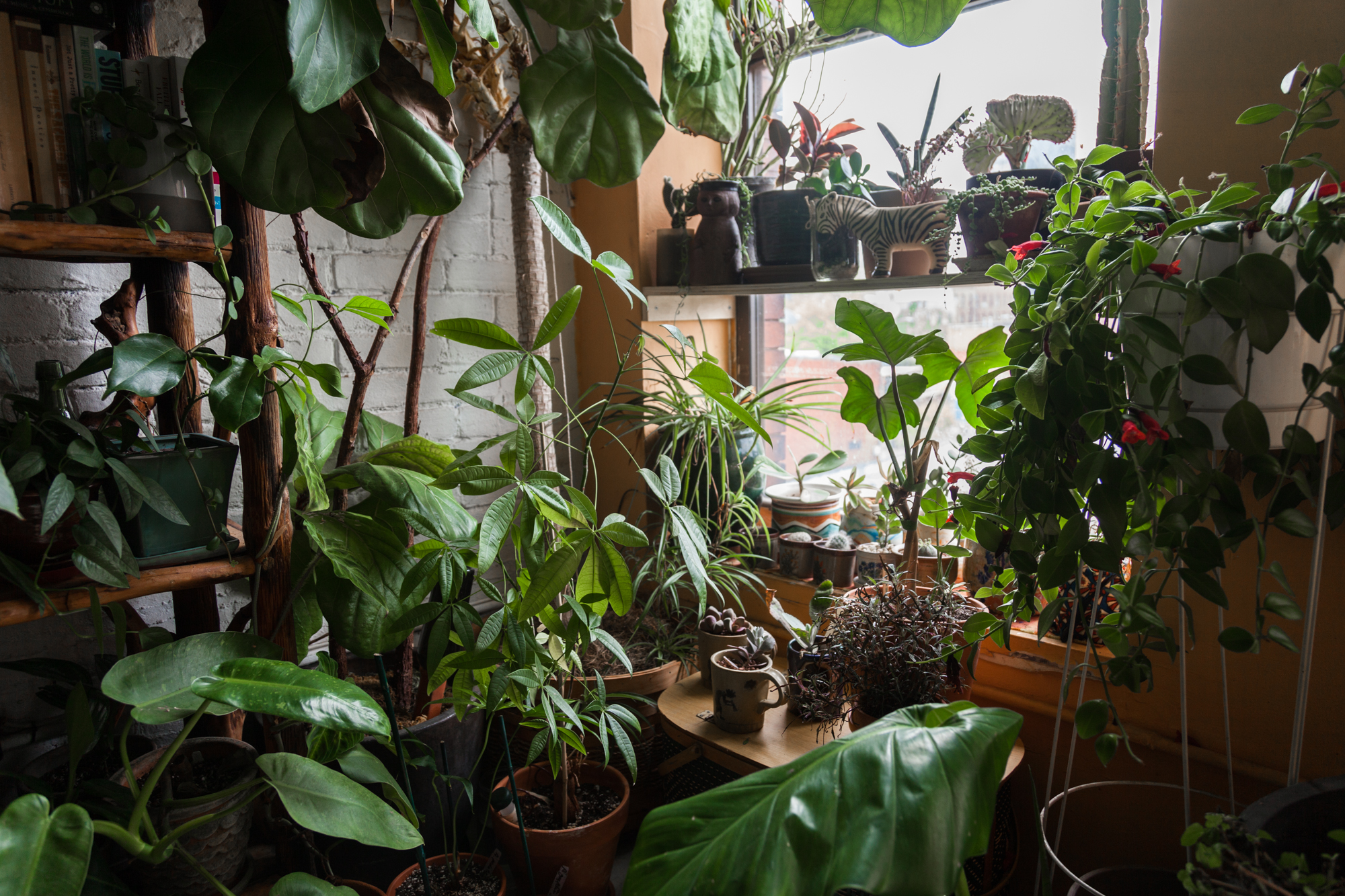 2017-May-6-Plants-SELECTS-9139.jpg
