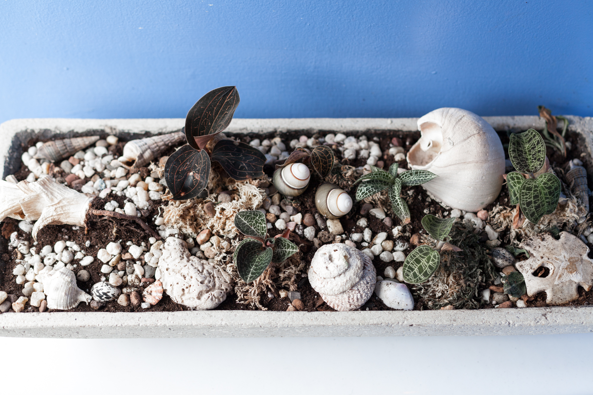 2017-May-6-Plants-SELECTS-9354.jpg