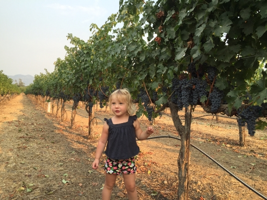 Remi in the vineyards