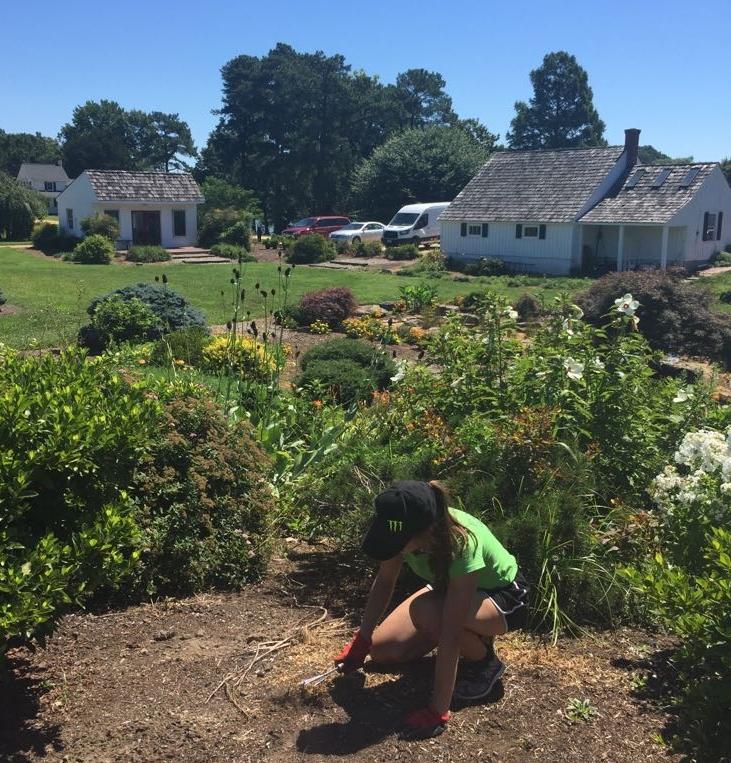 Klara pulling weeds, more weeds, and more weeds.