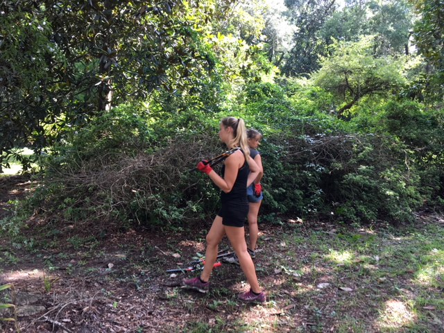 Tina and Lisa starting in to the second large clump of Formosa Azaleas.